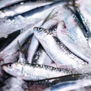Boquerones pescado a domicilio