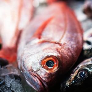 Breca pescado a domicilio